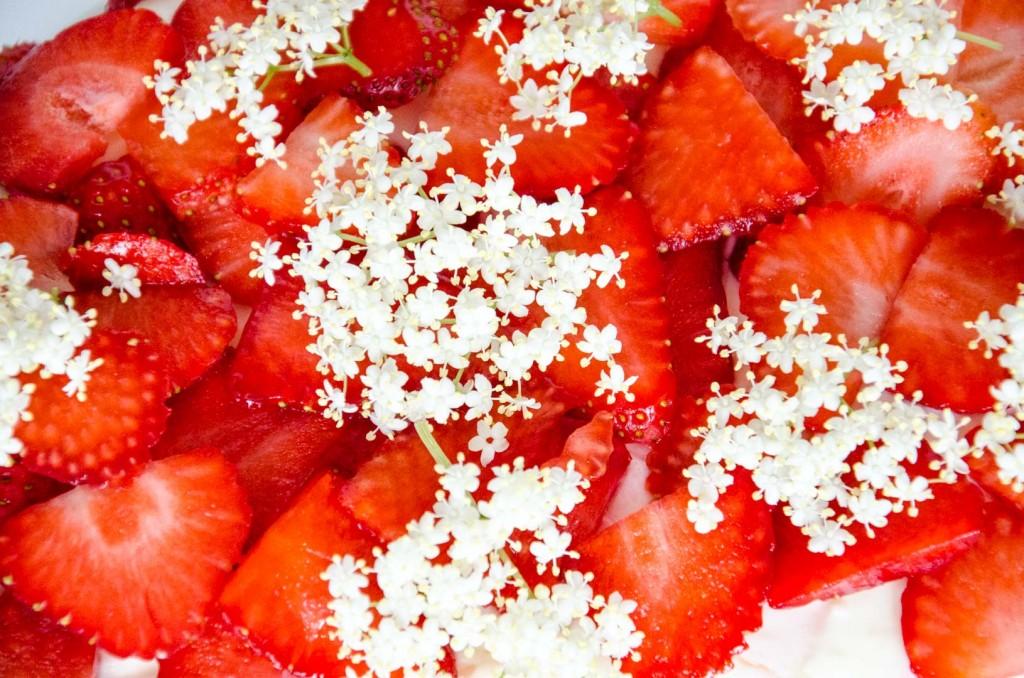 Erdbeer Holunder Schokoladen-Torte-14